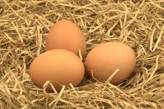 Huevos recientemente escogidos con la paja Huevos frescos en una hierba de la paja del heno Fotografía de archivo libre de regalías