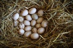 Huevos recientemente puestos del pato en jerarquía de la paja Foto de archivo