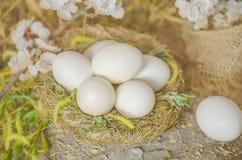 Huevos recientemente puestos en jerarquía del heno Imagen de archivo libre de regalías