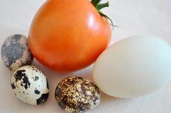 Huevos revueltos con los tomates Imagenes de archivo