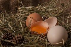 Huevos sin procesar Imágenes de archivo libres de regalías