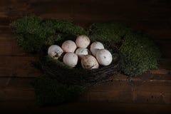 Huevos sucios del pollo Foto de archivo