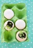 Huevos y berro de agua Fotografía de archivo