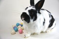 Huevos y conejito de Pascua Imagen de archivo