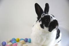 Huevos y conejito de Pascua Imágenes de archivo libres de regalías