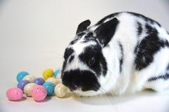 Huevos y conejito de Pascua Foto de archivo