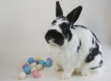 Huevos y conejito de Pascua Imagen de archivo libre de regalías