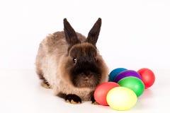 Huevos y conejo de Pascua Imagen de archivo libre de regalías