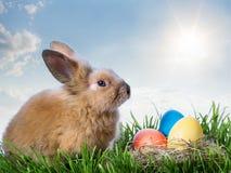 Huevos y conejo del color de Pascua en hierba verde debajo del cielo azul fotos de archivo