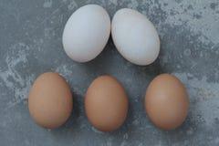 Huevos y huevos del pato con el fondo del vintage Fotografía de archivo libre de regalías