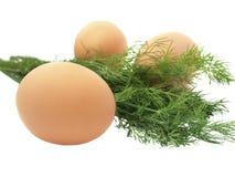 Huevos y eneldo Fotografía de archivo libre de regalías