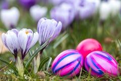 Huevos y flores de Pascua Fotografía de archivo libre de regalías