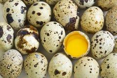 Huevos y huevo de codornices con dos yemas de huevo Imagenes de archivo