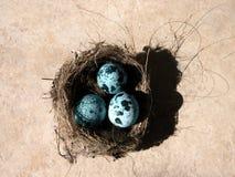 Huevos y jerarquía foto de archivo
