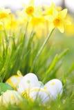 Huevos y narcisos de Pascua al aire libre foto de archivo