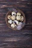Huevos y plumas de codornices en jerarquía en el fondo de madera Visión superior, espacio libre Foto de archivo libre de regalías