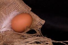 Huevos y plumas del pollo en el despido Fondo negro Extracto Imágenes de archivo libres de regalías