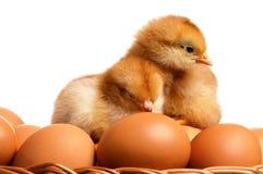 Huevos y pollo Imagen de archivo