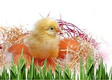 Huevos y pollo Imágenes de archivo libres de regalías