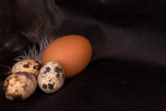 Huevos y pollo de codornices en un fondo negro extracto de la comida Imágenes de archivo libres de regalías