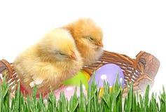Huevos y pollos de Pascua Fotografía de archivo libre de regalías