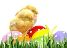 Huevos y pollos de Pascua Fotos de archivo