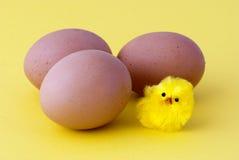 Huevos y polluelo Fotografía de archivo