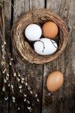 Huevos y sauce Fotos de archivo