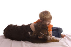 Hug. Caucasian toddler hugging his brown Australian shepherd puppy laying on a white bed sheet. Isolated on white, both model released Stock Photos