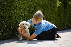 Hug and love of a young boy to a small, very young puppy golden retriever outdoor. stock image