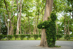 Hug tree Stock Photography