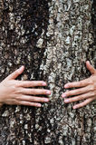Hug tree Royalty Free Stock Photos