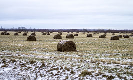 A huge abandoned field with haystacks Stock Images
