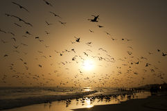 Huge amount of seagulls at the shore Stock Photos
