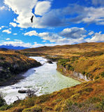 Huge Andean condors flying over water Stock Images