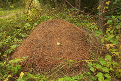 Huge anthill Stock Images