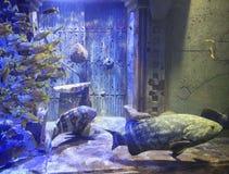Huge Aquarium, Bahamas Royalty Free Stock Photo