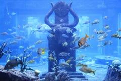 Huge Aquarium, Bahamas Stock Photo