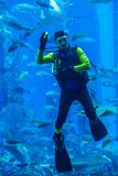 Huge aquarium in Dubai. Diver feeding fishes. Stock Photo