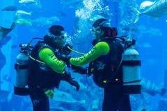 Huge aquarium in Dubai. Diver feeding fishes. Stock Photo