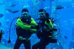 Huge aquarium in Dubai. Diver feeding fishes. Royalty Free Stock Photo