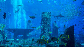 Huge aquarium filled with fish Royalty Free Stock Photo