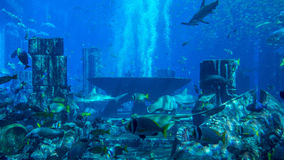 Huge aquarium filled with fish: symmetrical. A giant aquarium filled with a variety of tropical fish with some ruins in the background Royalty Free Stock Images