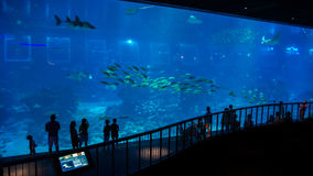 Huge aquarium in Singapore, with its inhabitants and visitors sihouettes Royalty Free Stock Images