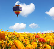 Huge balloon flies over the field Royalty Free Stock Photo