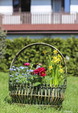 Huge basket full of colorful flowers Royalty Free Stock Photos