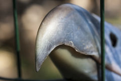 Huge beak in cell. Dangerous detail of predator eagle close up Royalty Free Stock Image