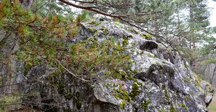 A huge boulder in North Ossetia. A huge stone standing in Zeiskam reserve in North Ossetia. The size of a boulder of 20 meters long, 9 meters wide and 8 meters Royalty Free Stock Photos