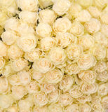 huge bouquet of white roses Stock Photos