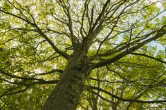 Huge and branching. Under big green tree. Nature composition royalty free stock photo